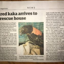 Injured Kaka arrives to a full rescue house